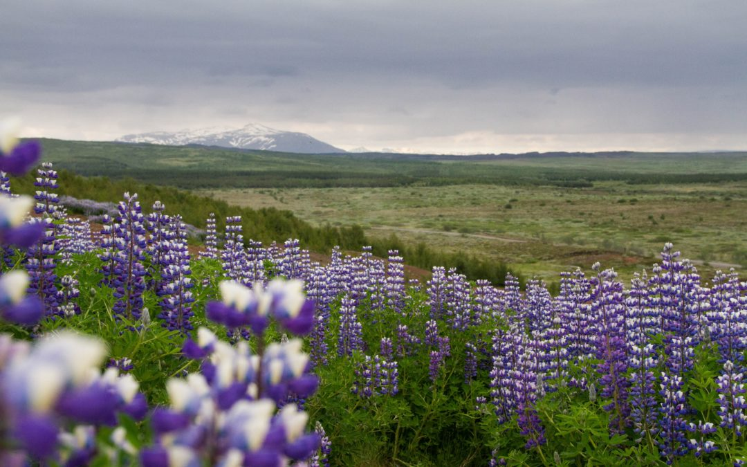Iceland: The Ultimate Roadtrip