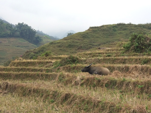 animal in Vietnam