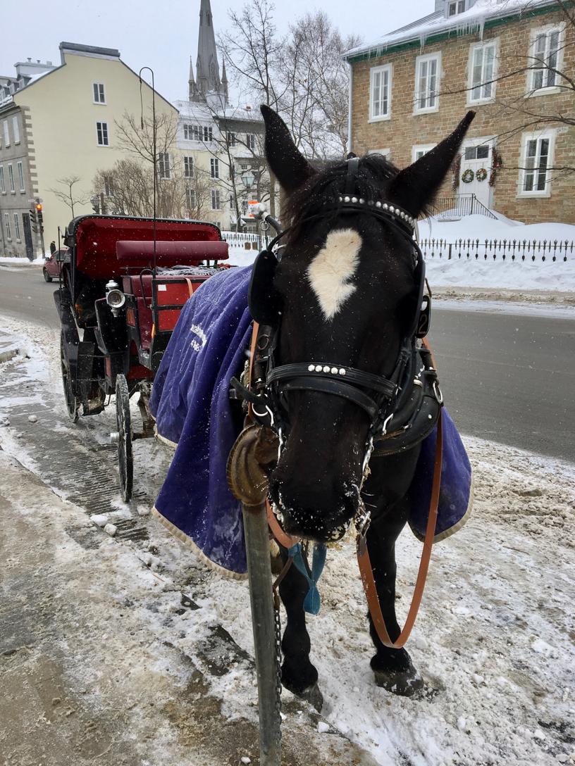 horse in Canada